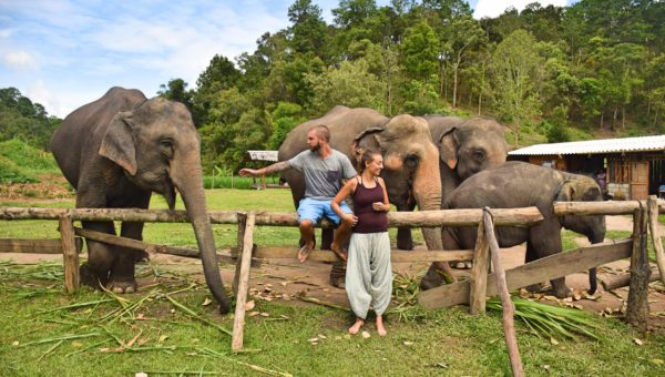 Top Three Things You Need To Know To Find The Best Elephant Sanctuary In Chiang Mai
