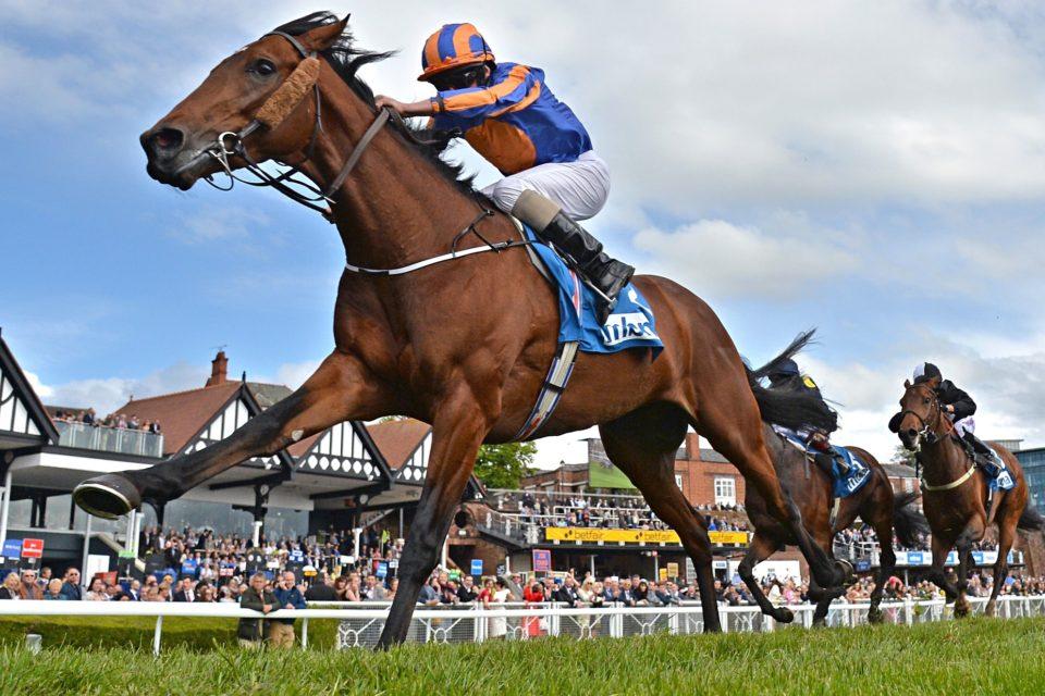 Creating Horse Racing Treble Tips