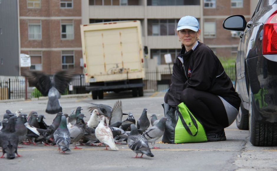 Stop The Pigeon The Finest Courier Service Of Them All