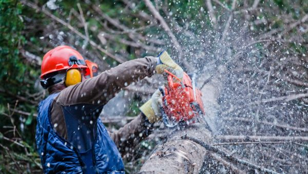 How To Pick The Right Kinds Of Tools For Tree-Surgery?